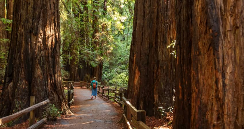 A person walking among the redwoods in Muir Woods