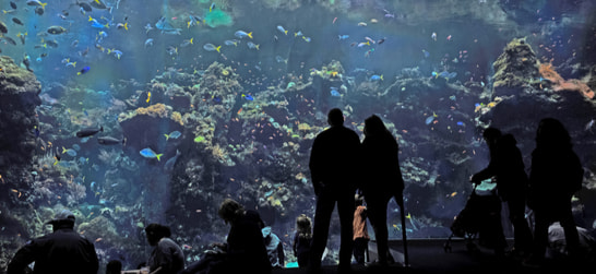 people in front of an aquarium tank at the california academy of sciences