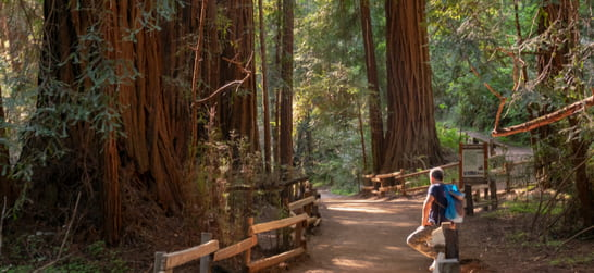 hiker among the redwoods in muir forest